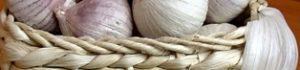 Вирощування часнику: антикризовий бізнес у селі