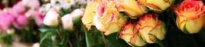 Вирощування троянд із живців – бізнес на балконі